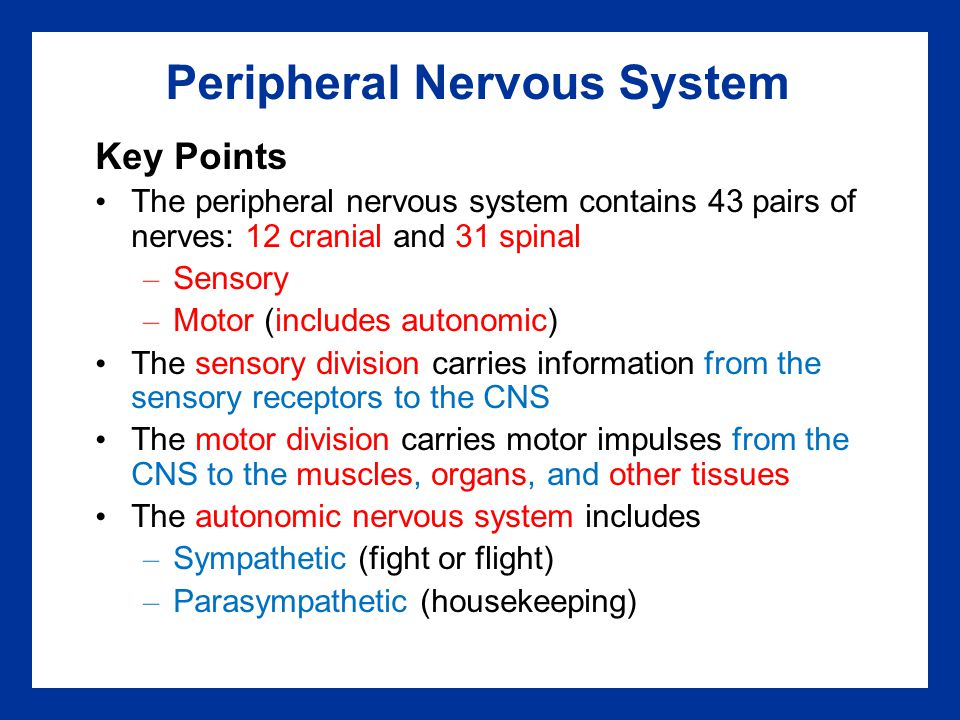Peripheral Nervous System Key Points The peripheral nervous system contains 43 pairs of nerves: 12 cranial and 31 spinal – Sensory – Motor (includes a