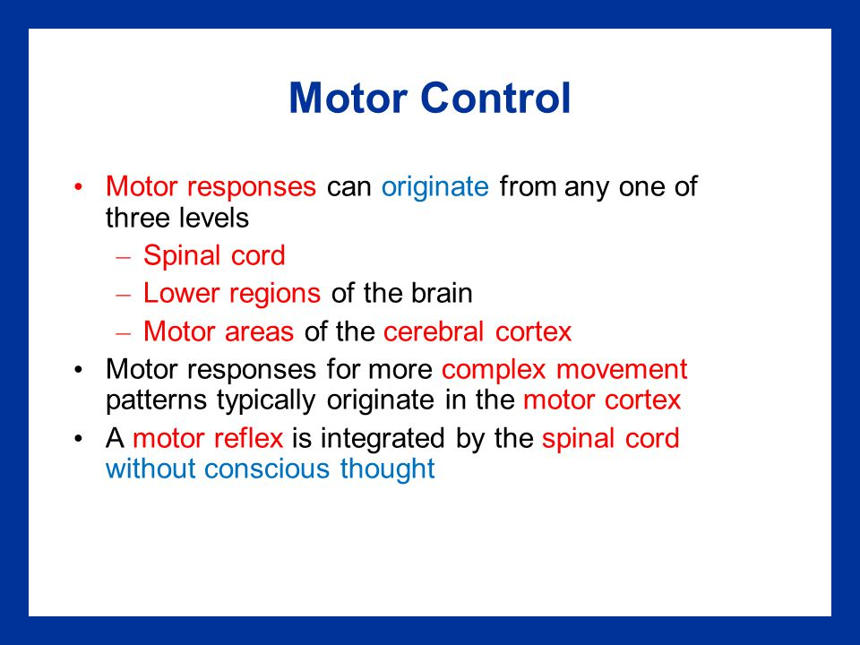 Motor Control Motor responses can originate from any one of three levels – Spinal cord – Lower regions of the brain – Motor areas of the cerebral cort