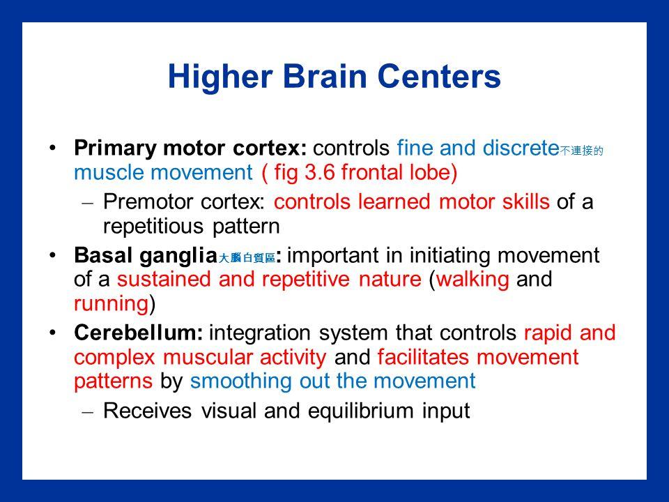 Higher Brain Centers Primary motor cortex: controls fine and discrete 不連接的 muscle movement ( fig 3.6 frontal lobe) – Premotor cortex: controls learned