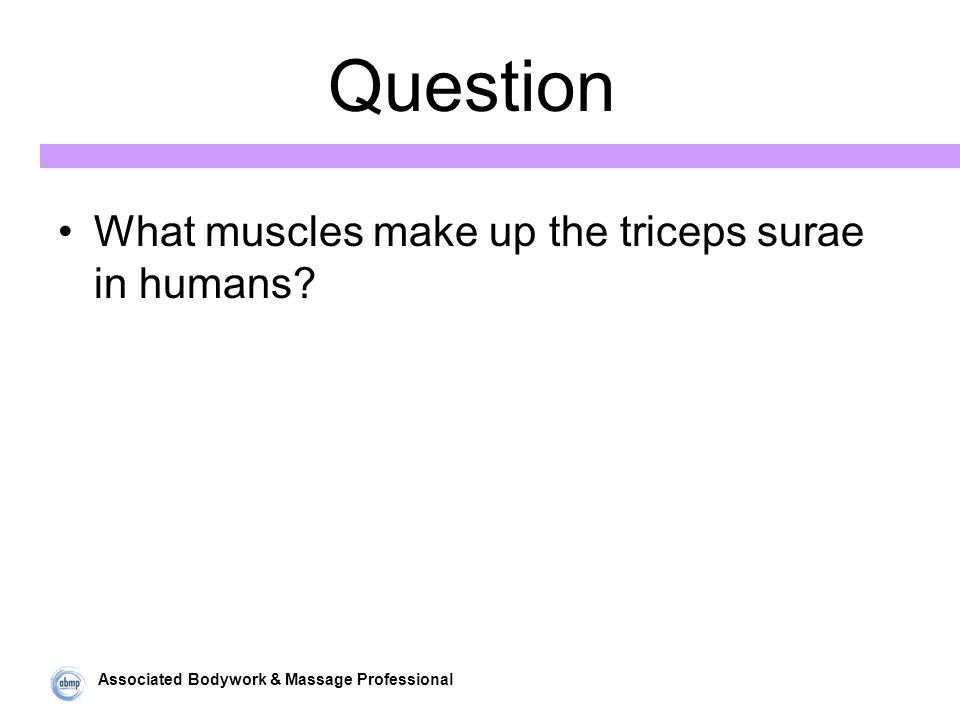Associated Bodywork & Massage Professional Question What muscles make up the triceps surae in humans