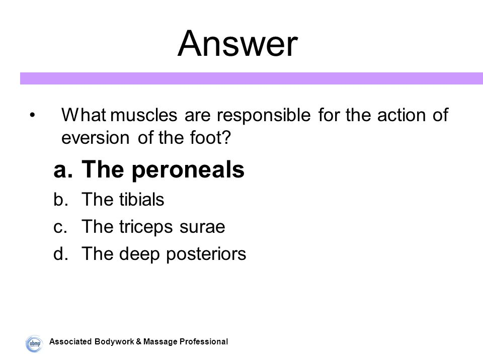 Associated Bodywork & Massage Professional Answer What muscles are responsible for the action of eversion of the foot.