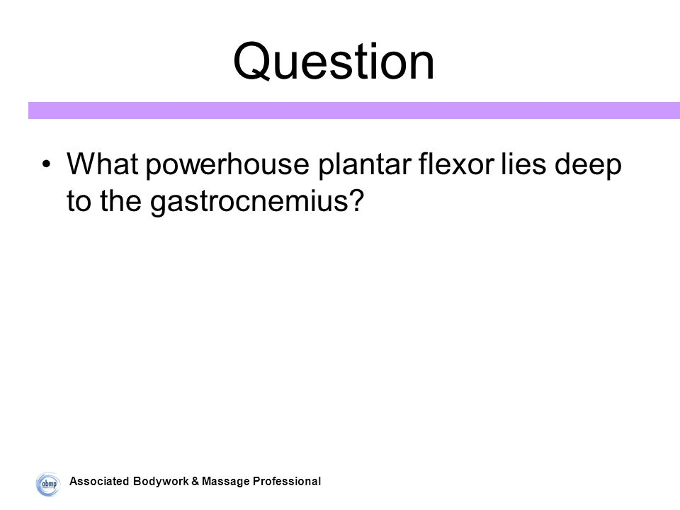 Associated Bodywork & Massage Professional Question What powerhouse plantar flexor lies deep to the gastrocnemius