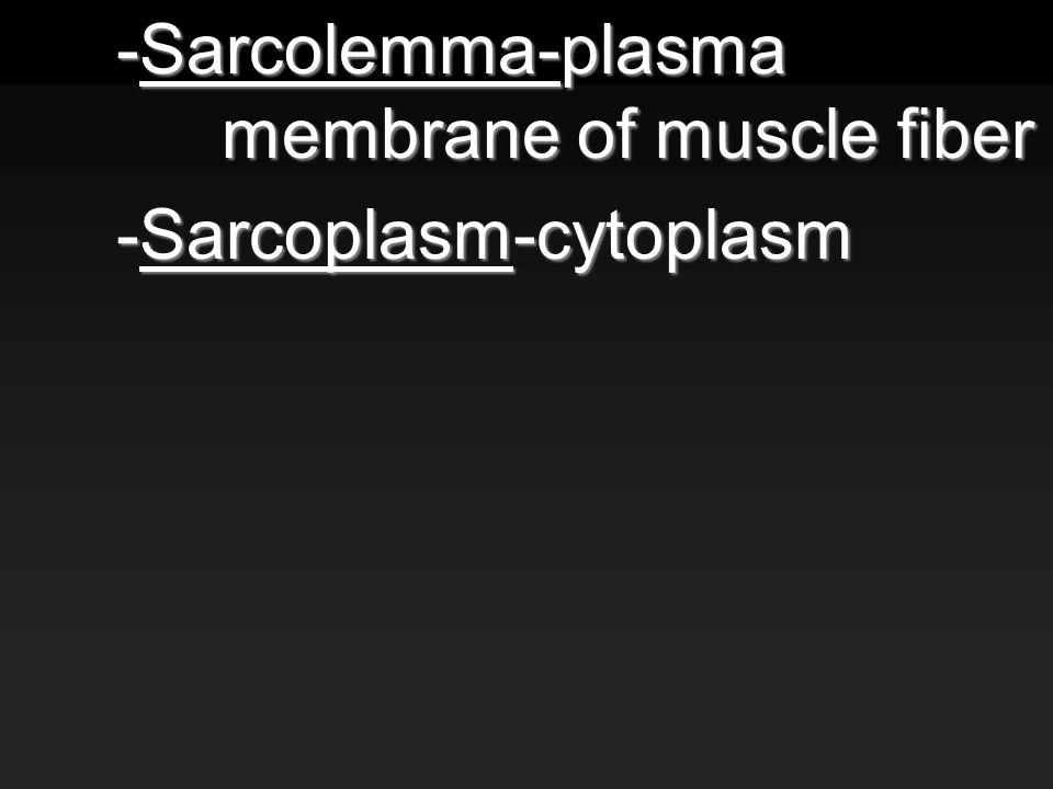 -Sarcolemma-plasma membrane of muscle fiber -Sarcoplasm-cytoplasm