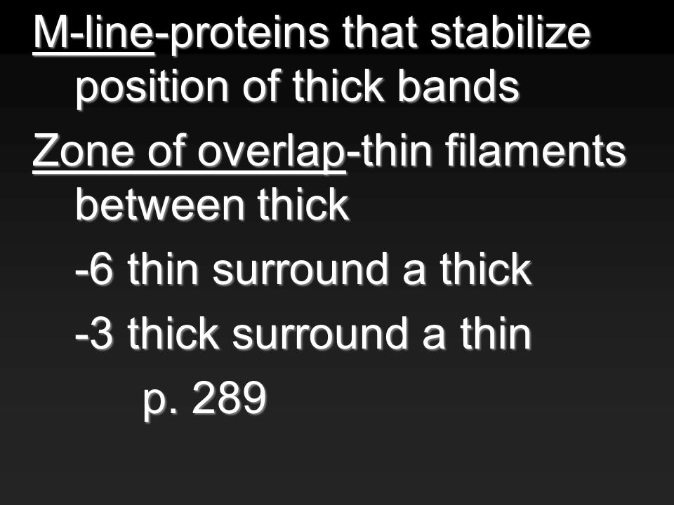 M-line-proteins that stabilize position of thick bands Zone of overlap-thin filaments between thick -6 thin surround a thick -3 thick surround a thin p.