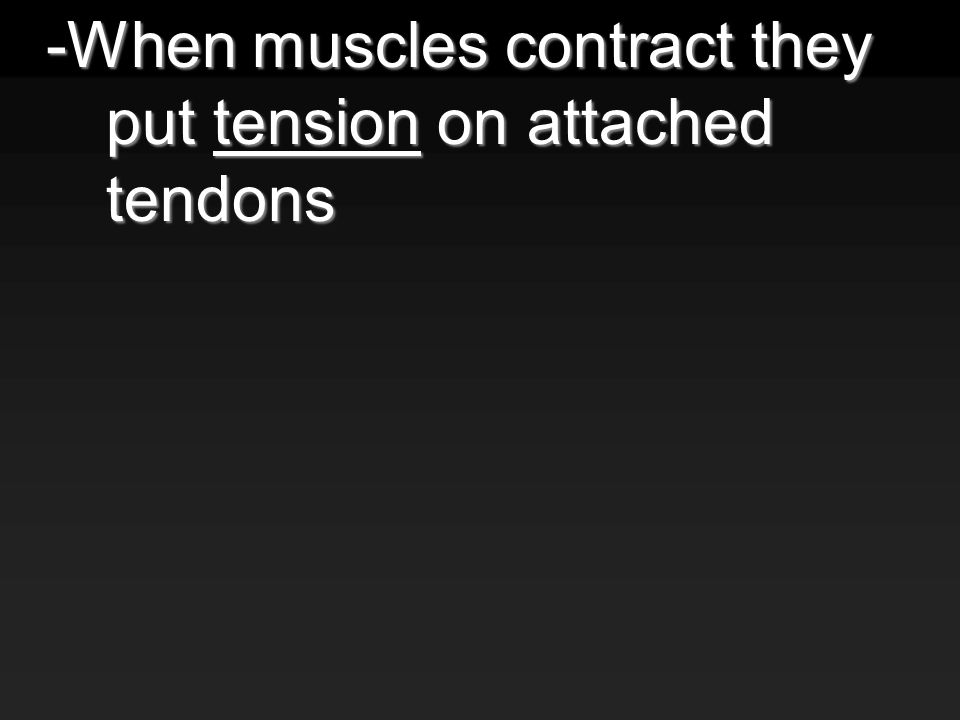 -When muscles contract they put tension on attached tendons