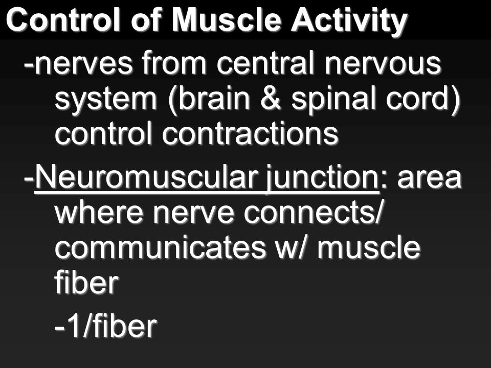 Control of Muscle Activity -nerves from central nervous system (brain & spinal cord) control contractions -Neuromuscular junction: area where nerve connects/ communicates w/ muscle fiber -1/fiber