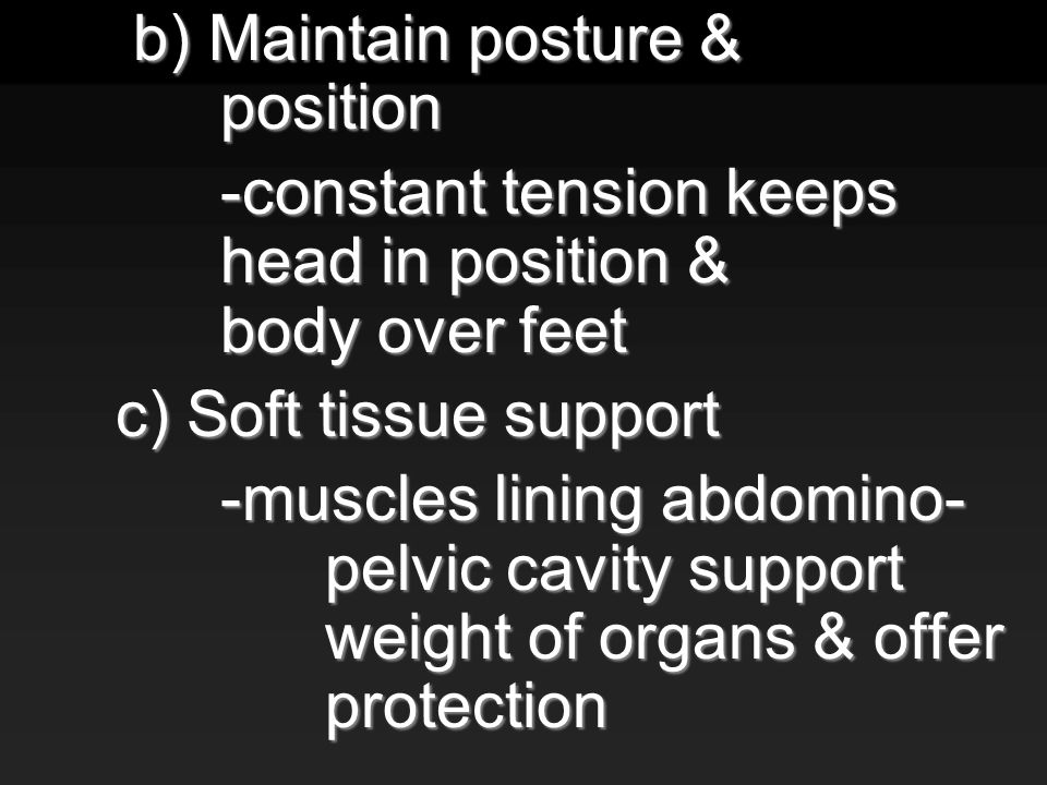 b) Maintain posture & position b) Maintain posture & position -constant tension keeps head in position & body over feet c) Soft tissue support -muscles lining abdomino- pelvic cavity support weight of organs & offer protection