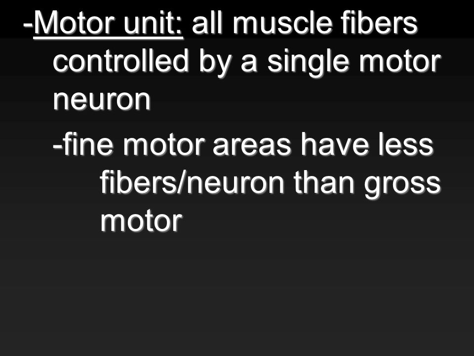 -Motor unit: all muscle fibers controlled by a single motor neuron -fine motor areas have less fibers/neuron than gross motor