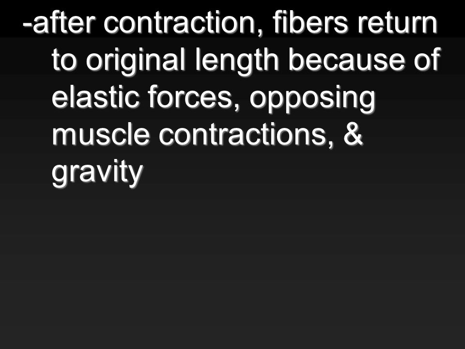 -after contraction, fibers return to original length because of elastic forces, opposing muscle contractions, & gravity