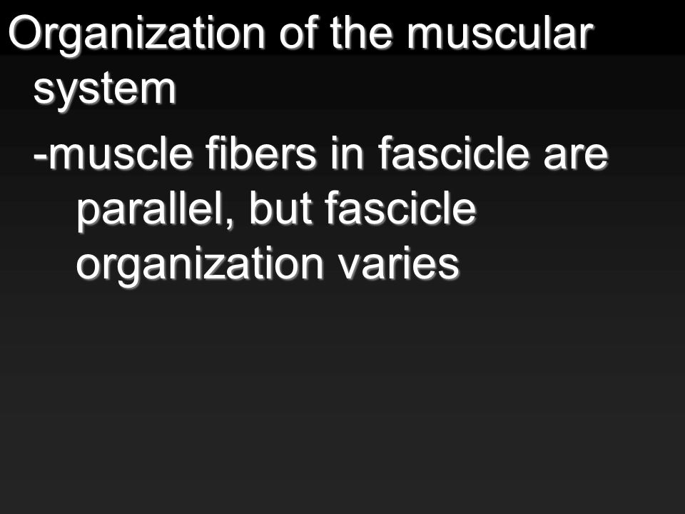 Organization of the muscular system -muscle fibers in fascicle are parallel, but fascicle organization varies