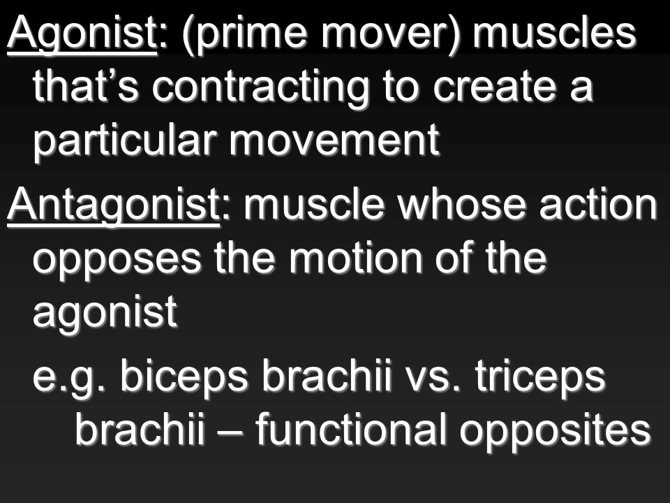 Agonist: (prime mover) muscles that's contracting to create a particular movement Antagonist: muscle whose action opposes the motion of the agonist e.g.
