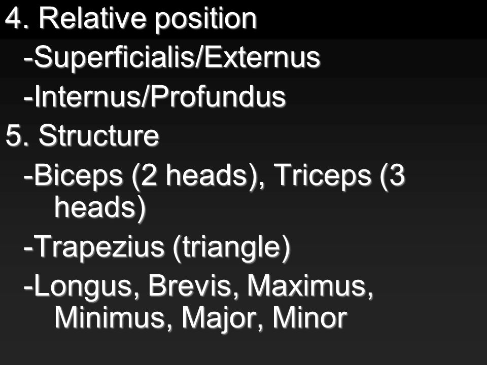 4. Relative position -Superficialis/Externus-Internus/Profundus 5.
