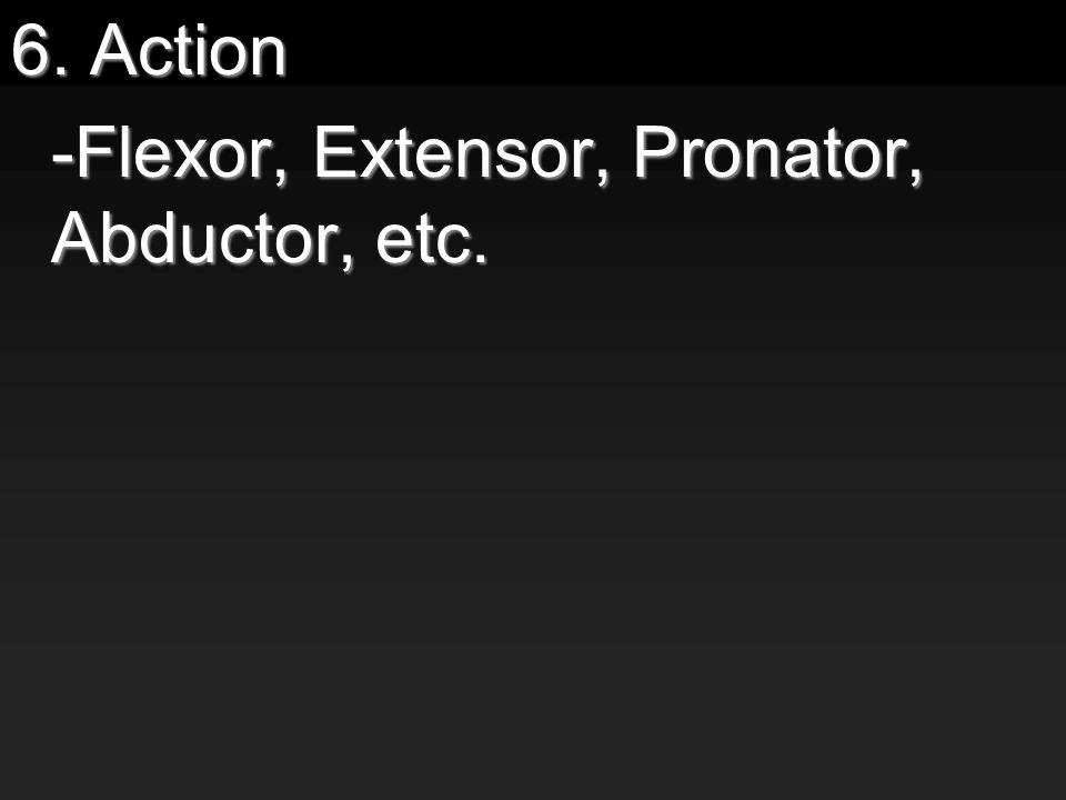6. Action -Flexor, Extensor, Pronator, Abductor, etc.