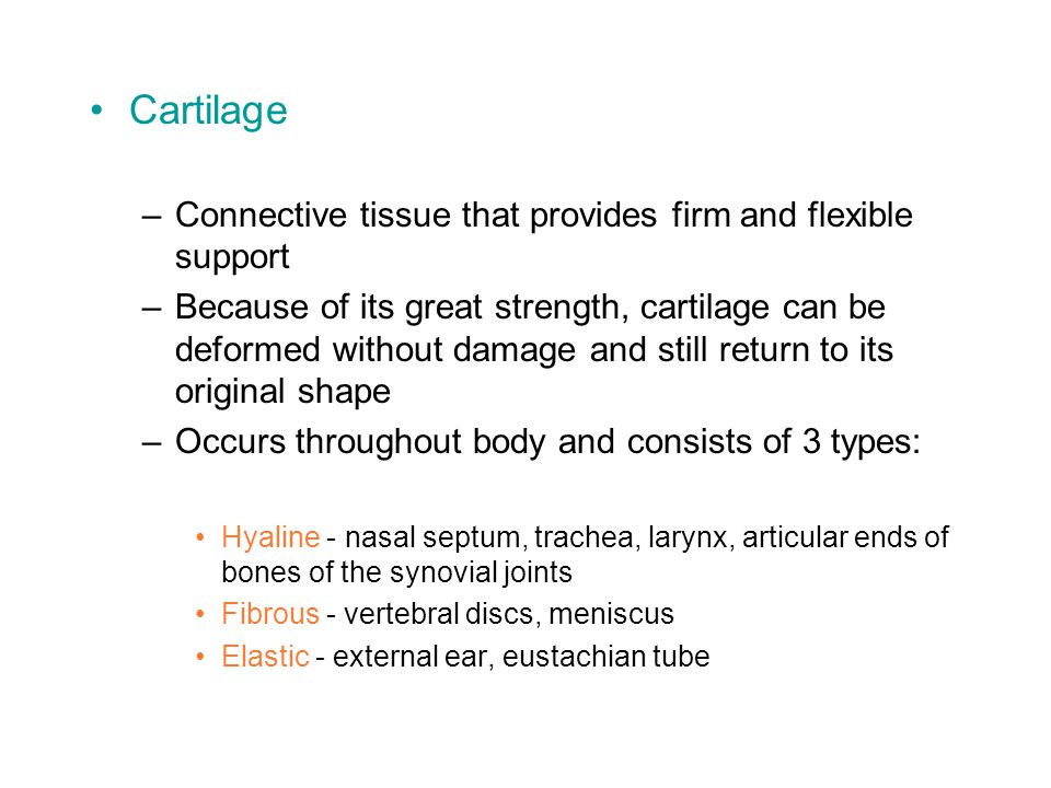 Cartilage –Connective tissue that provides firm and flexible support –Because of its great strength, cartilage can be deformed without damage and still return to its original shape –Occurs throughout body and consists of 3 types: Hyaline - nasal septum, trachea, larynx, articular ends of bones of the synovial joints Fibrous - vertebral discs, meniscus Elastic - external ear, eustachian tube