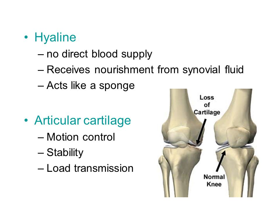 Hyaline –no direct blood supply –Receives nourishment from synovial fluid –Acts like a sponge Articular cartilage –Motion control –Stability –Load transmission