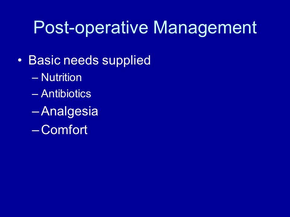 Post-operative Management Basic needs supplied –Nutrition –Antibiotics –Analgesia –Comfort