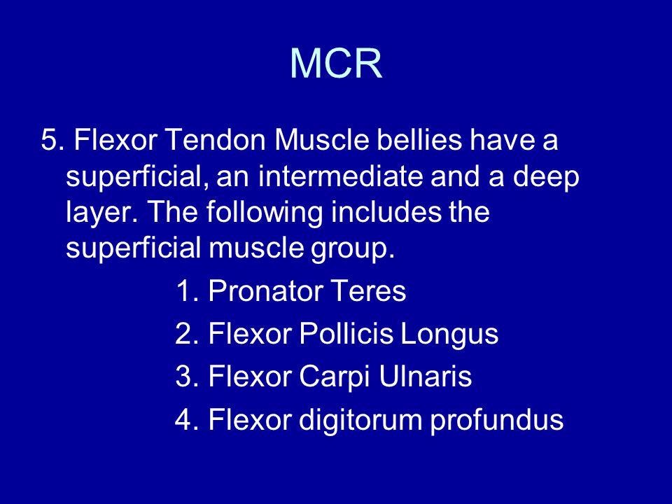 MCR 5. Flexor Tendon Muscle bellies have a superficial, an intermediate and a deep layer.