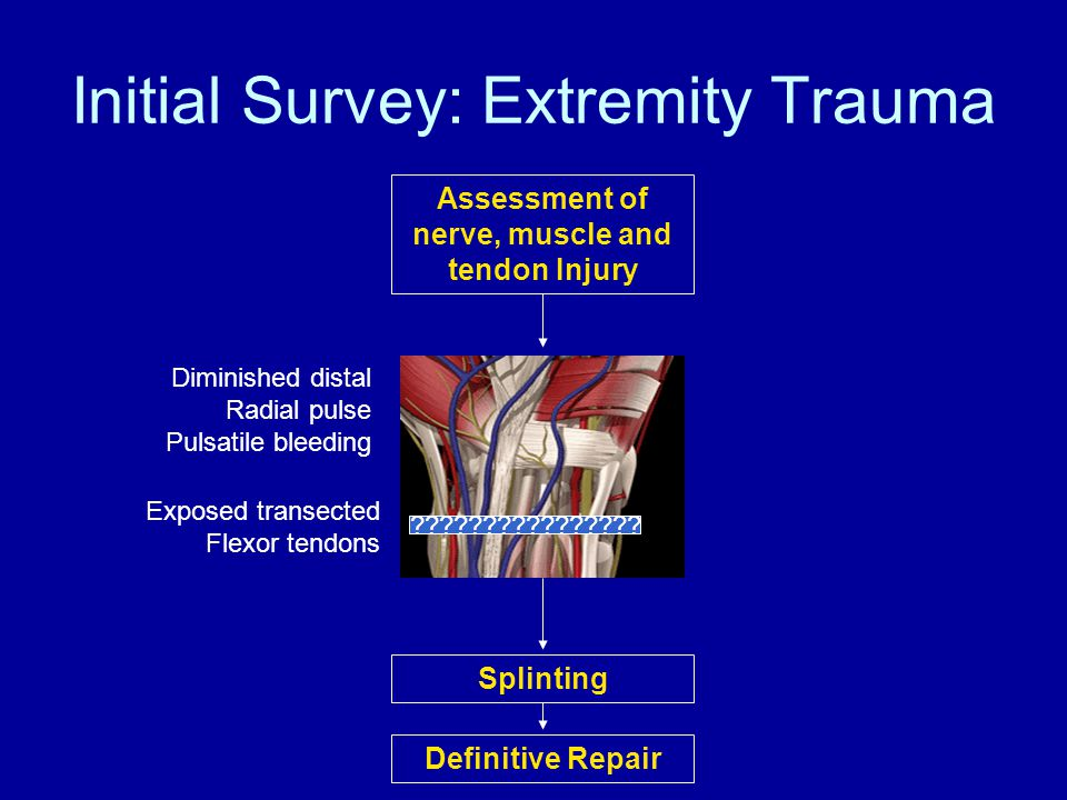 Initial Survey: Extremity Trauma Assessment of nerve, muscle and tendon Injury Splinting Exposed transected Flexor tendons Definitive Repair Diminished distal Radial pulse Pulsatile bleeding ????????????????