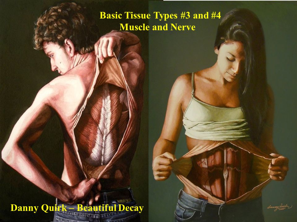 Basic Tissue Types #3 and #4 Muscle and Nerve Danny Quirk – Beautiful Decay