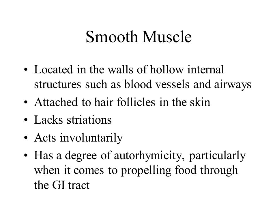 Smooth Muscle Located in the walls of hollow internal structures such as blood vessels and airways Attached to hair follicles in the skin Lacks striat