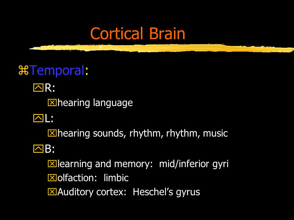 Cortical Brain zTemporal: yR: xhearing language yL: xhearing sounds, rhythm, rhythm, music yB: xlearning and memory: mid/inferior gyri xolfaction: limbic xAuditory cortex: Heschel's gyrus