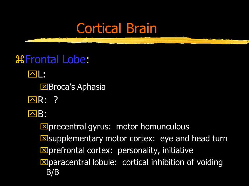 Cortical Brain zFrontal Lobe: yL: xBroca's Aphasia yR: .