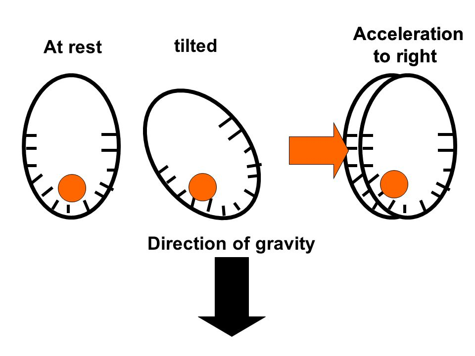 At rest tilted Acceleration to right Direction of gravity Acceleration to right