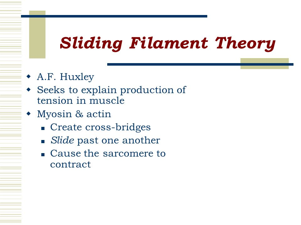 Sliding Filament Theory  A.F.