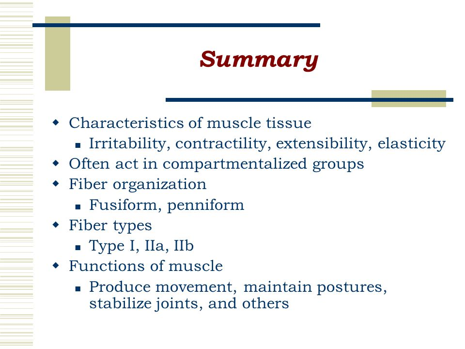 Summary  Characteristics of muscle tissue Irritability, contractility, extensibility, elasticity  Often act in compartmentalized groups  Fiber organization Fusiform, penniform  Fiber types Type I, IIa, IIb  Functions of muscle Produce movement, maintain postures, stabilize joints, and others