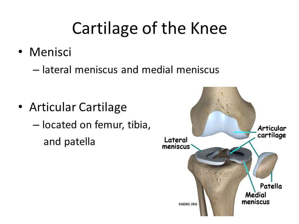 Cartilage of the Knee Menisci – lateral meniscus and medial meniscus Articular Cartilage – located on femur, tibia, and patella