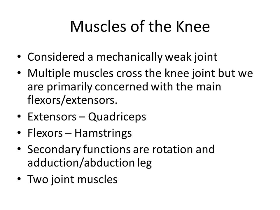 Muscles of the Knee Considered a mechanically weak joint Multiple muscles cross the knee joint but we are primarily concerned with the main flexors/ex