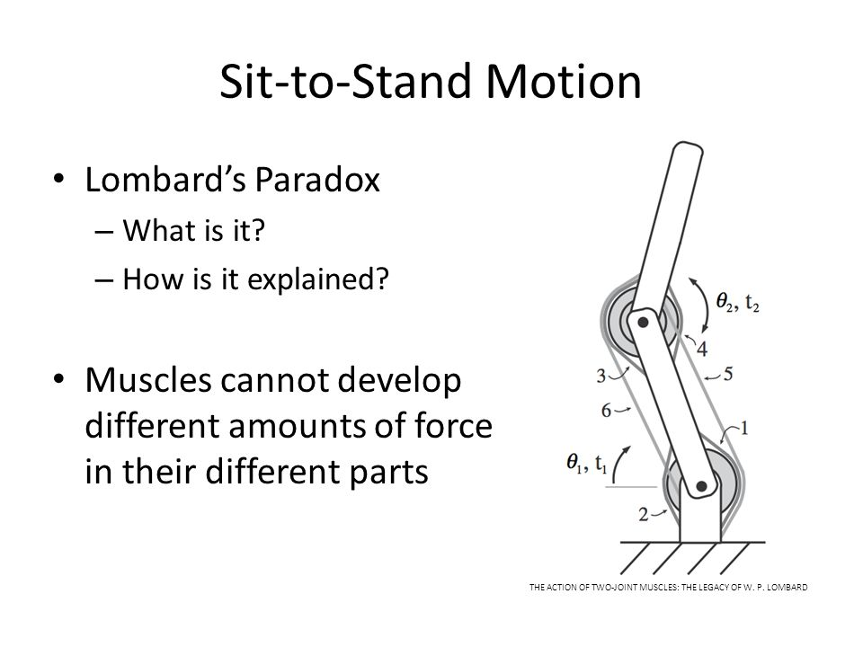 Sit-to-Stand Motion Lombard's Paradox – What is it? – How is it explained? Muscles cannot develop different amounts of force in their different parts