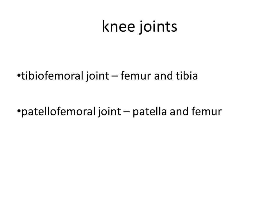 knee joints tibiofemoral joint – femur and tibia patellofemoral joint – patella and femur