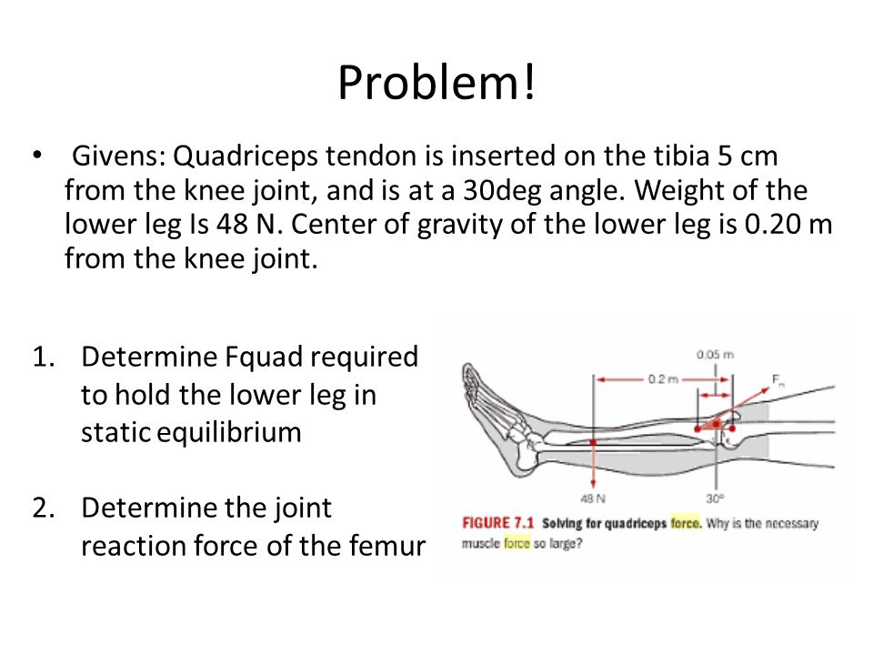Problem! Givens: Quadriceps tendon is inserted on the tibia 5 cm from the knee joint, and is at a 30deg angle. Weight of the lower leg Is 48 N. Center