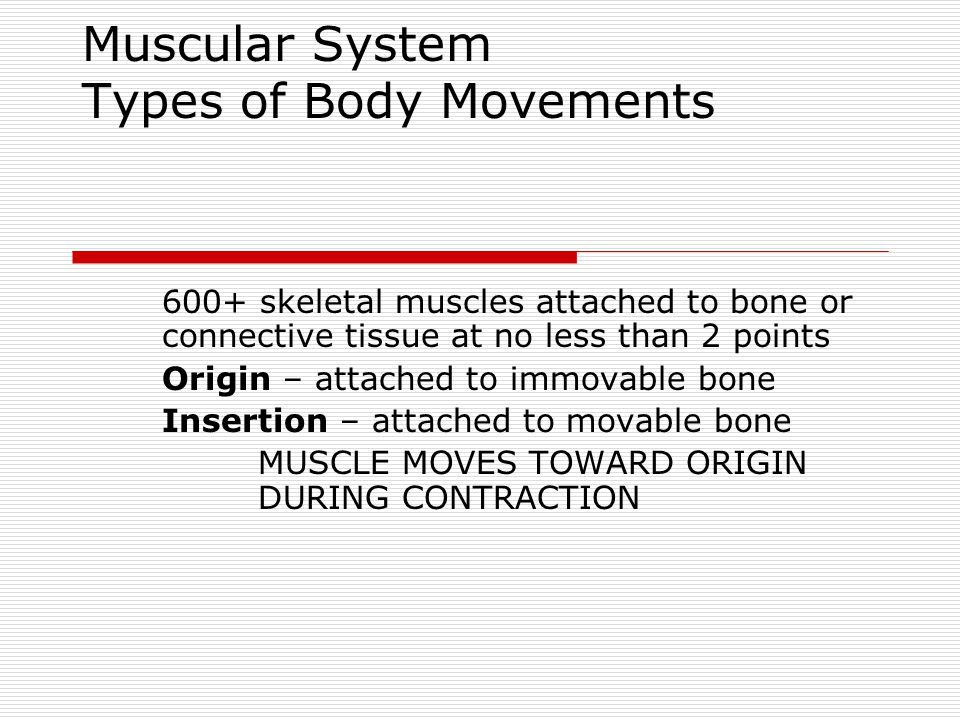 Muscular System Types of Body Movements 600+ skeletal muscles attached to bone or connective tissue at no less than 2 points Origin – attached to immo