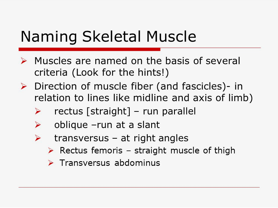 Naming Skeletal Muscle  Muscles are named on the basis of several criteria (Look for the hints!)  Direction of muscle fiber (and fascicles)- in rela