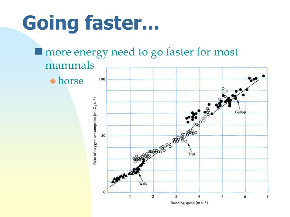 Going faster... nmore energy need to go faster for most mammals u horse