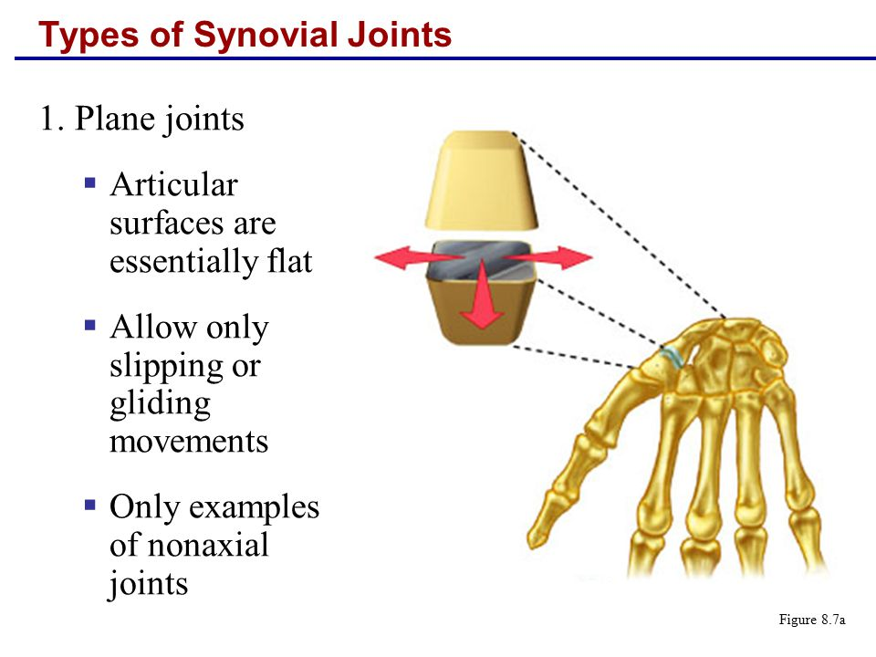 Types of Synovial Joints 1.