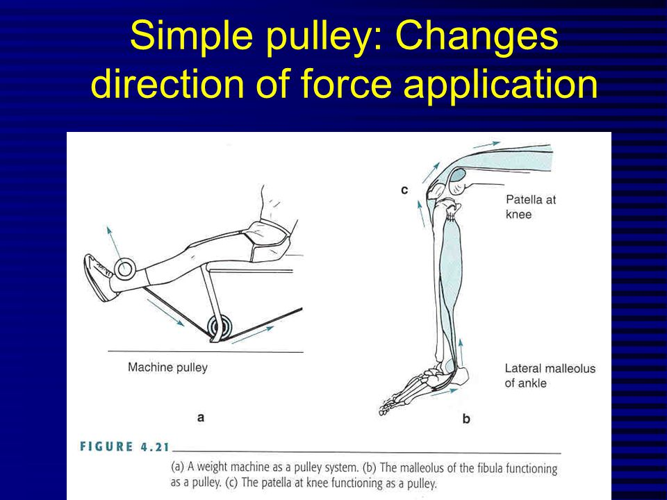 Musculoskeletal Levers n Elements of levers - axis (joint center) -rigid bar (long bone) -motive and resistance torques (muscle pull, gravity, inertia), or moments n Concept of Net Torque n Law of levers (  CW torques =  CCW torques) -Force X Force Arm = Resistance X Resistance Arm - or Ff = Rr n Analysis of musculoskeletal lever system -Turning, or rotary component (Fd sin  ) -Stabilizing and dislocating component (Fd cos  )