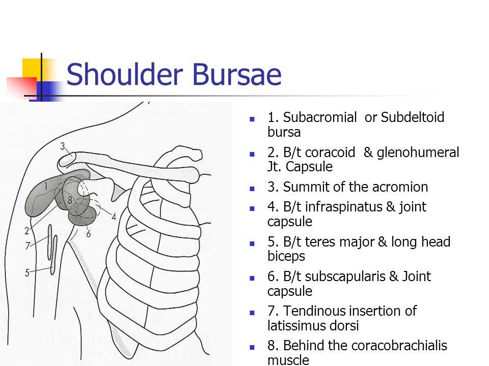 Shoulder Bursae 1. Subacromial or Subdeltoid bursa 2. B/t coracoid & glenohumeral Jt. Capsule 3. Summit of the acromion 4. B/t infraspinatus & joint c