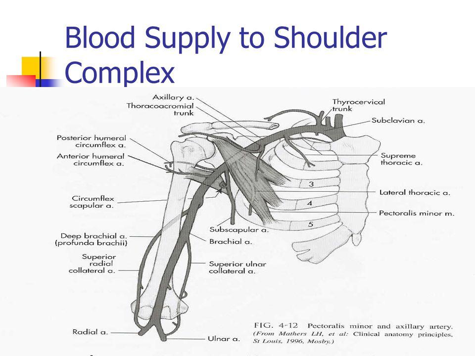 Blood Supply to Shoulder Complex