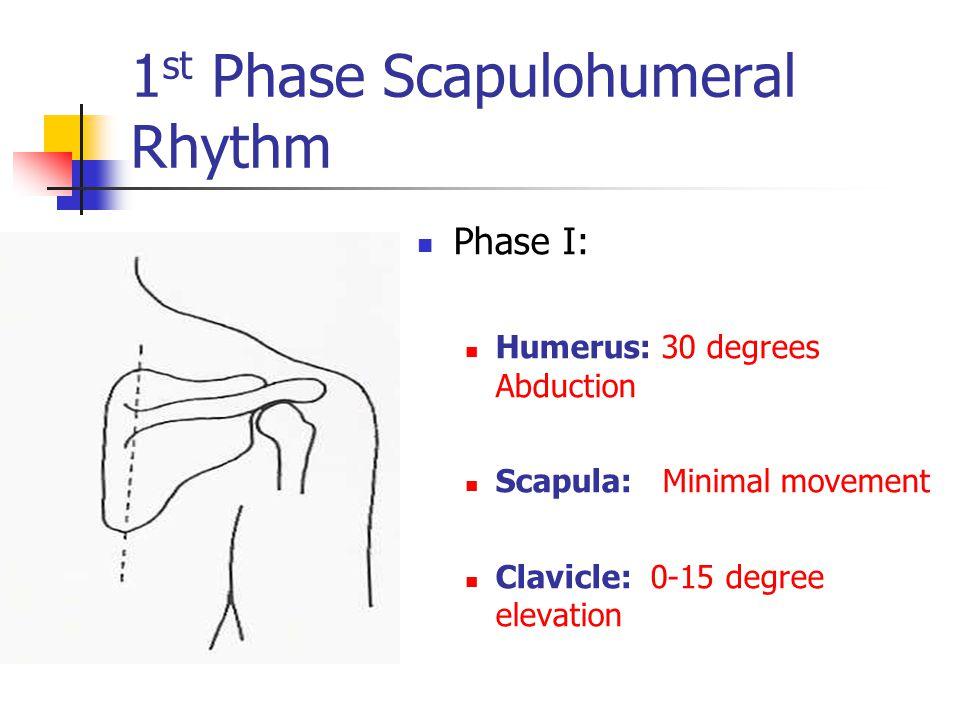 1 st Phase Scapulohumeral Rhythm Phase I: Humerus: 30 degrees Abduction Scapula: Minimal movement Clavicle: 0-15 degree elevation
