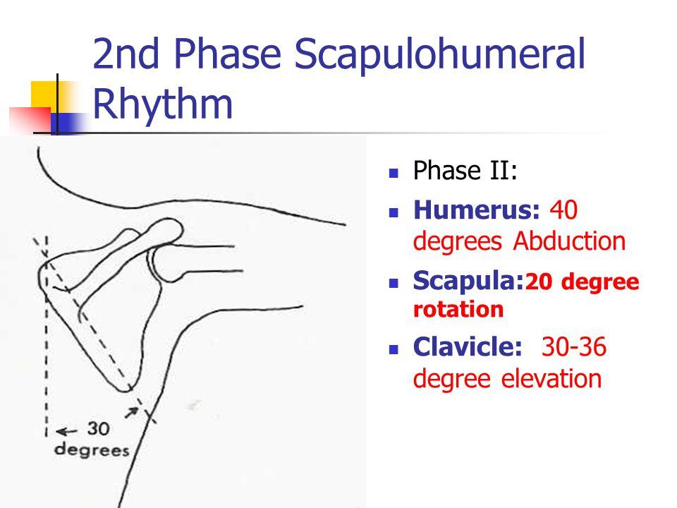 2nd Phase Scapulohumeral Rhythm Phase II: Humerus: 40 degrees Abduction Scapula: 20 degree rotation Clavicle: 30-36 degree elevation