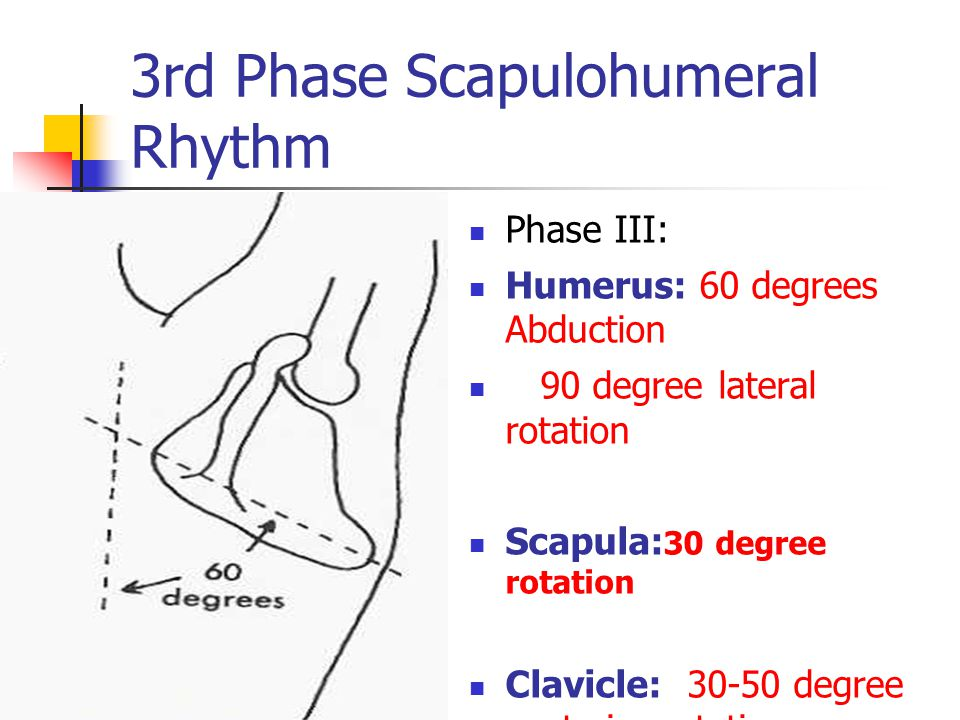 3rd Phase Scapulohumeral Rhythm Phase III: Humerus: 60 degrees Abduction 90 degree lateral rotation Scapula: 30 degree rotation Clavicle: 30-50 degree