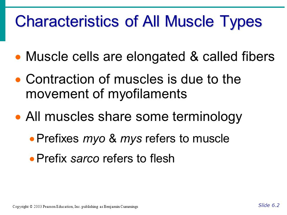 Characteristics of All Muscle Types Slide 6.2 Copyright © 2003 Pearson Education, Inc. publishing as Benjamin Cummings  Muscle cells are elongated &