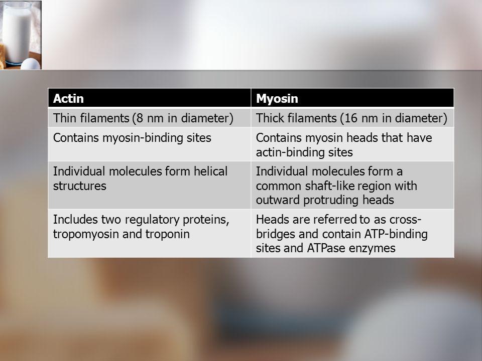 ActinMyosin Thin filaments (8 nm in diameter)Thick filaments (16 nm in diameter) Contains myosin-binding sitesContains myosin heads that have actin-bi