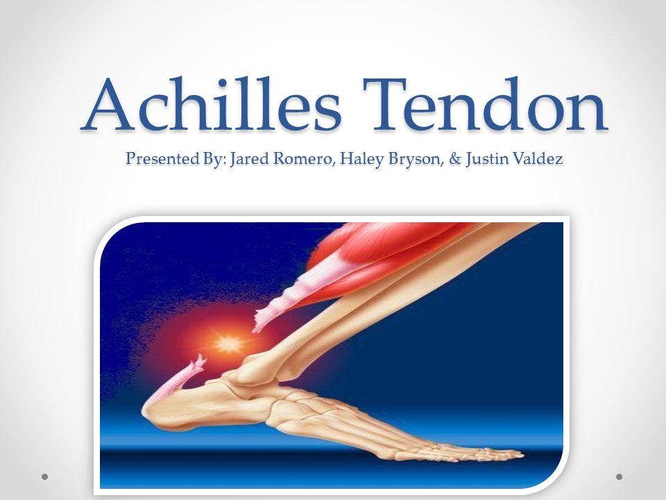 Achilles Tendon Presented By: Jared Romero, Haley Bryson, & Justin Valdez