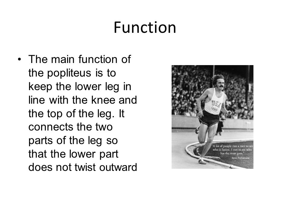 Function The main function of the popliteus is to keep the lower leg in line with the knee and the top of the leg. It connects the two parts of the le