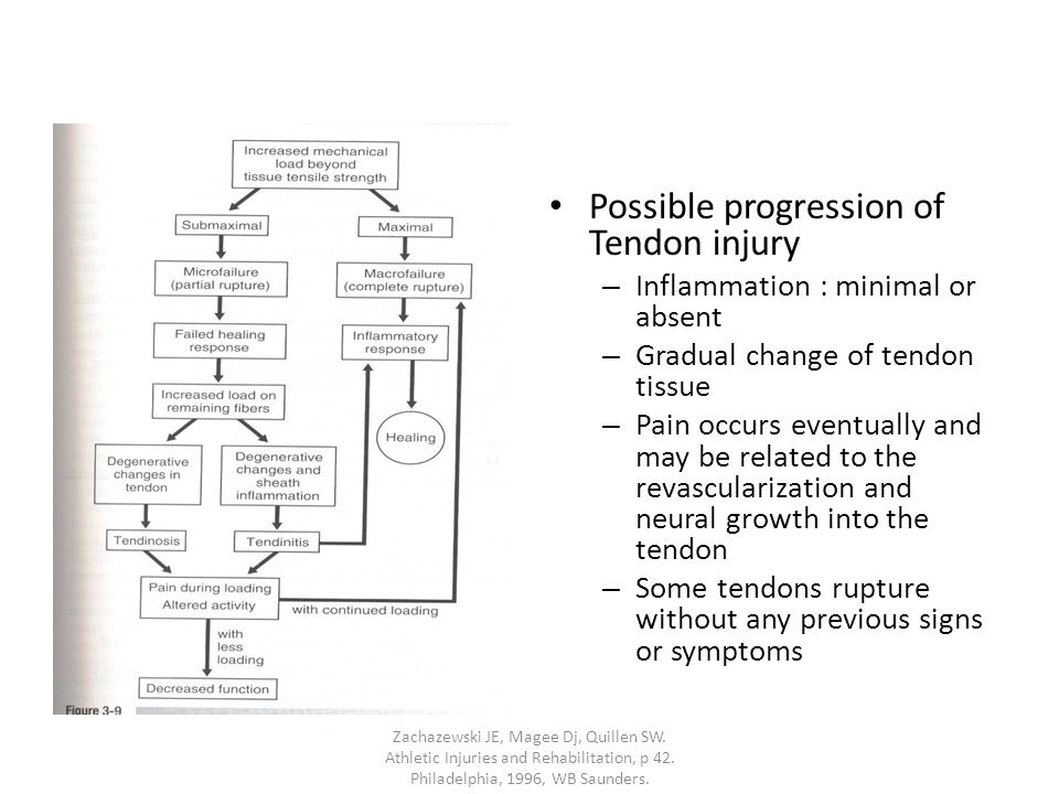 Possible progression of Tendon injury – Inflammation : minimal or absent – Gradual change of tendon tissue – Pain occurs eventually and may be related to the revascularization and neural growth into the tendon – Some tendons rupture without any previous signs or symptoms Zachazewski JE, Magee Dj, Quillen SW.