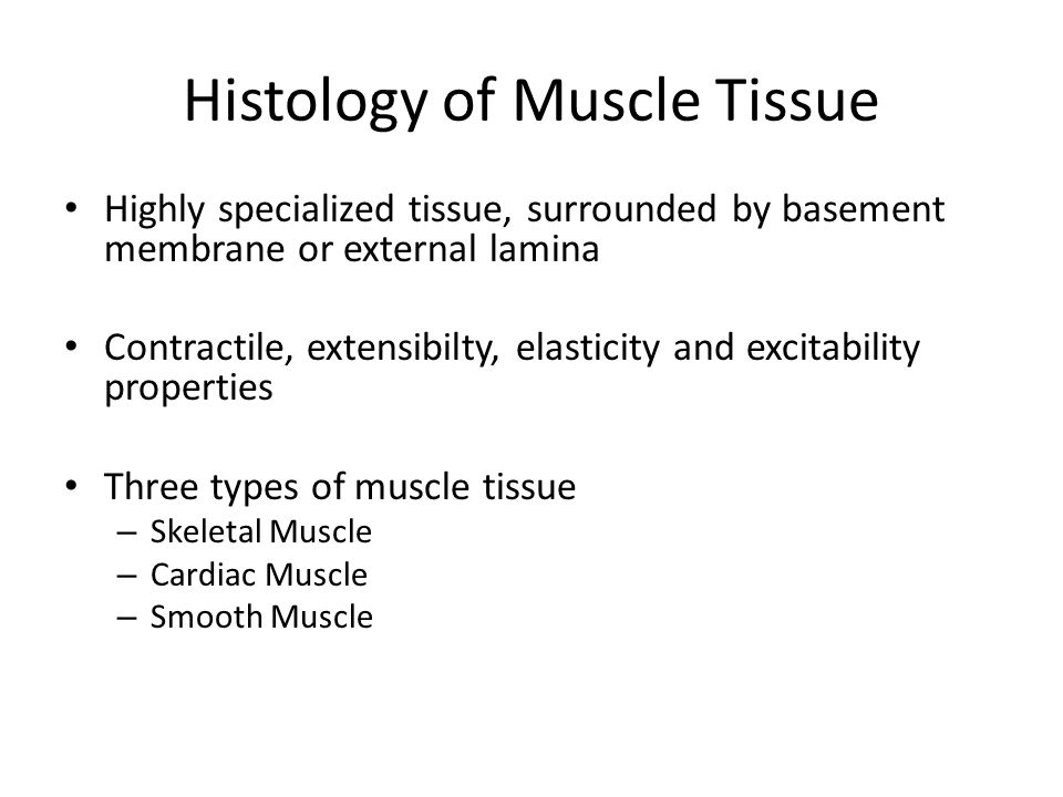 Histology of Muscle Tissue Highly specialized tissue, surrounded by basement membrane or external lamina Contractile, extensibilty, elasticity and excitability properties Three types of muscle tissue – Skeletal Muscle – Cardiac Muscle – Smooth Muscle